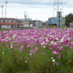 滋賀県にある道の駅!あいとうマーガレットステーションで休憩しませんか?
