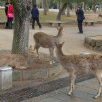 奈良公園&東大寺に行ってきました。