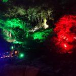 赤目四十八滝のライトアップは幻想的でした。